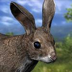 Американский кролик