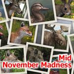 Глобальное соревнование: Безумный ноябрь