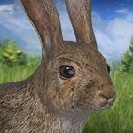 Европейский кролик в игре theHunter