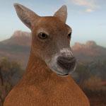 Большой рыжик кенгуру в игре theHunter